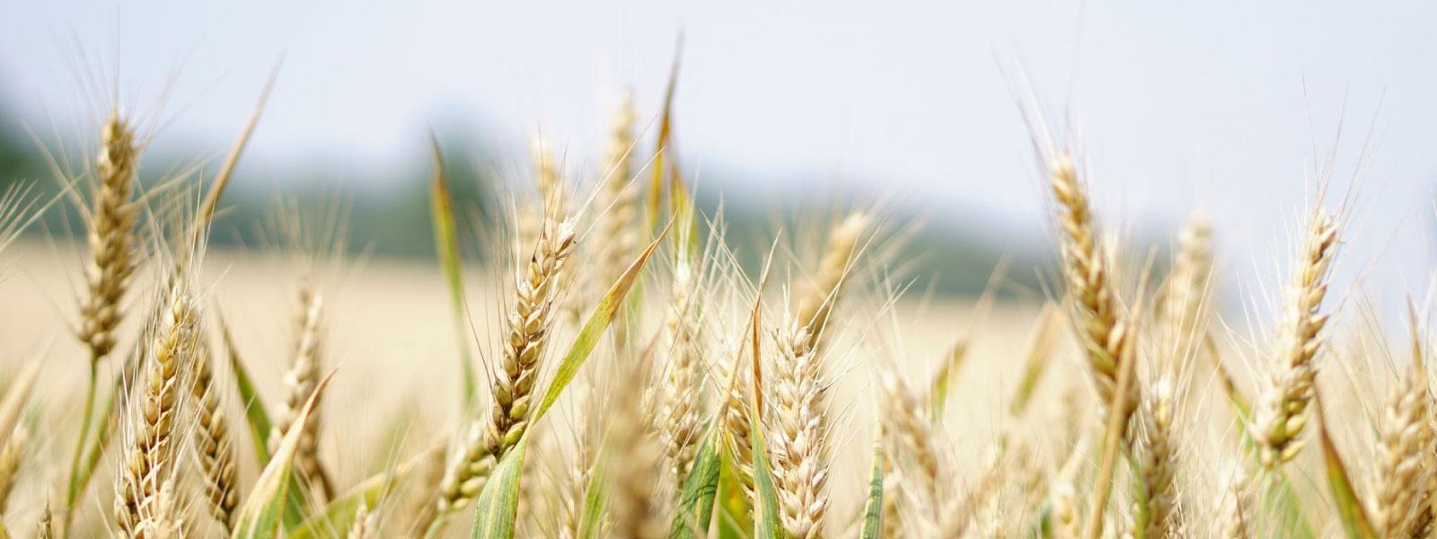 COMMENT PERMETTRE AUX FILIÈRES AGRICOLES ET AGRO-ALIMENTAIRES DE DEVENIR RESPONSABLES ET ACTRICES DE LEUR IMPACT CLIMAT ?